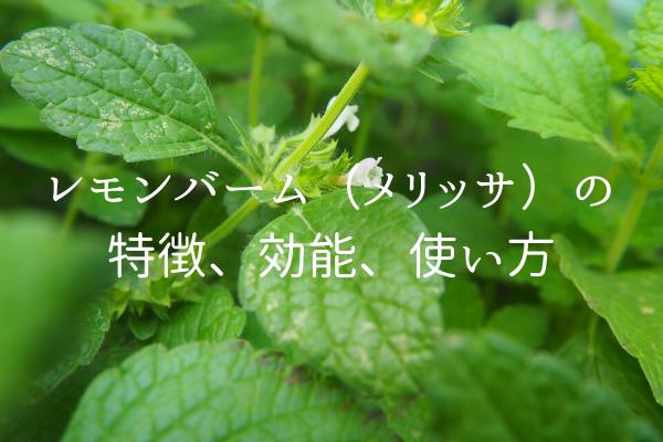 レモンバーム 精油